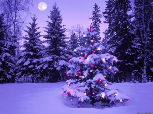 елка-новый год